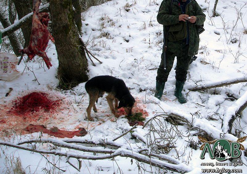 Убития от бракониер сръндак край Бистрец