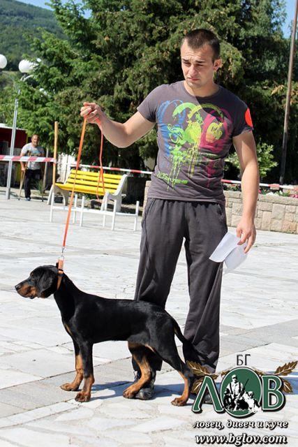 Екстериорна изложба на Българско гонче и други породи кучета