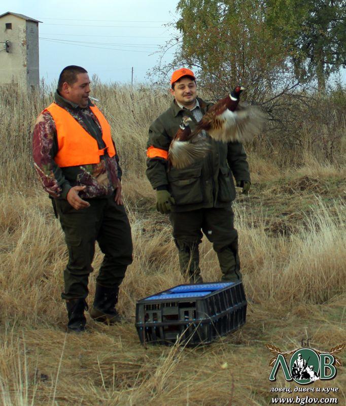 Разселване на фазани в ЛРД Железница