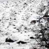 Яребици през зимата