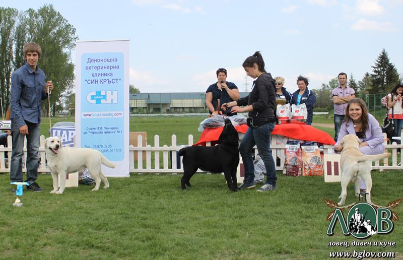 SURPRISING LABRADOR RETRIEVER CLUB SHOW 2012