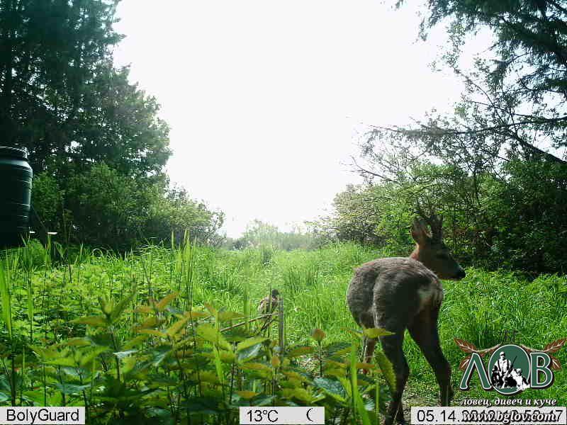 Trail Hunting Cams / ФОТОКАПАНИ