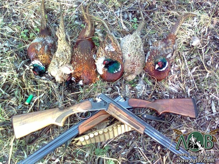 Лов на фазан