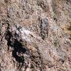 Гнездо на лешояди на язовир Студен кладенец