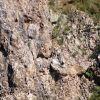 Гнезда на лешояди на язовир Студен кладенец