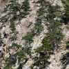 Дървета израсли на скалите