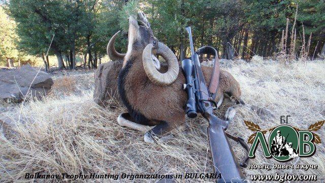 На лов за Муфлон и Елен Лопатар в Родопите